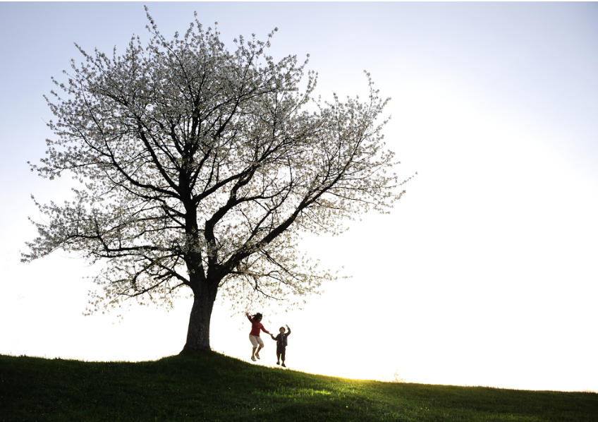 Two people jumping up, holding hands under the tree